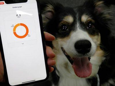 اپلیکیشن حیوانات