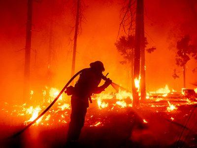 آتش سوزی جنگل ها
